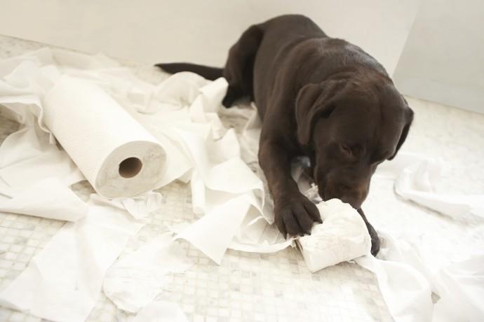 개들은 왜 그렇게도 두루마리 휴지를 좋아하는 걸까요? - GIB 제공